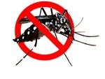 anti_mosquito11
